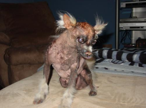 World 39 s Ugliest Dogs Faithfully