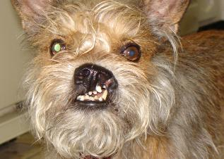 World S Ugliest Dogs Faithfully Free