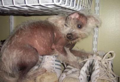 World S Ugliest Dogs Faithfully Free