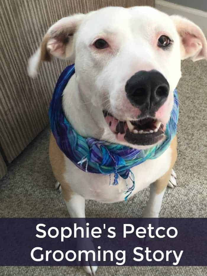 Sophie's Petco Grooming Story | Faithfully Free