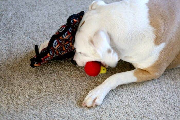 An Open Letter To My Dog Sweet